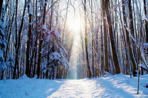 free-photo-snow-mountain-forest